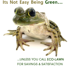 frog_3